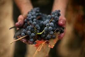 spansih wine